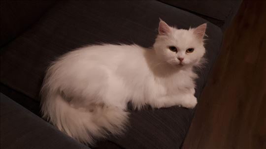 Persijska princeza