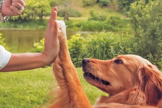 Čuvanje i dresura naših najodanijih prijatelja