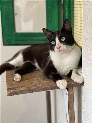 Mačak Srećko
