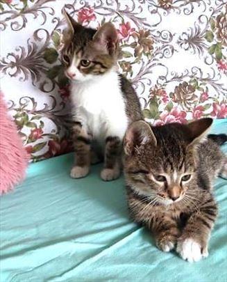 Momo i Fiona