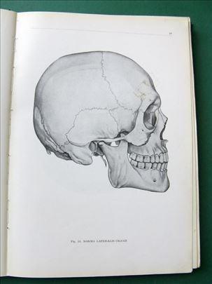 Anatomski atlas čovjekova tijela Kiss-Szentagothai