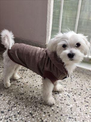 Duks za male pse - Pepito