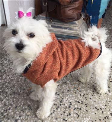 Džemperi za male pse ~ topli i mekani