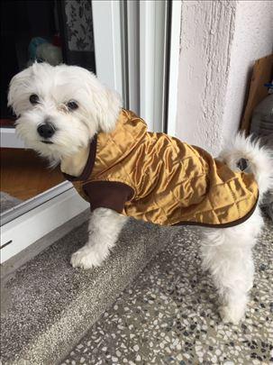 Jakna za male pse - topla i nepromociva - Zlatna