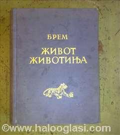Alfred Brem - život životinja