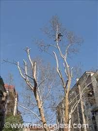 Seča stabala i orezivanje krošnji