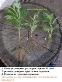 Rastvor za ožiljavanje reznica 50mg