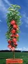 Stubasto i mini voće,naj-ponuda