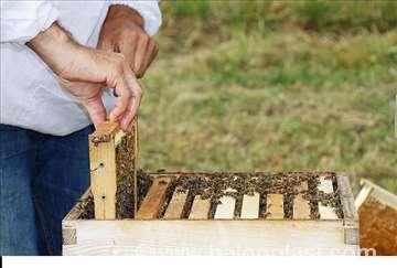 Pčele, društva, rojevi, matice..