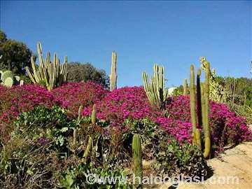 Kaktusi i sukulentne biljke