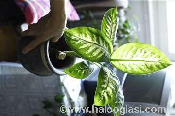 Razne sobne biljke