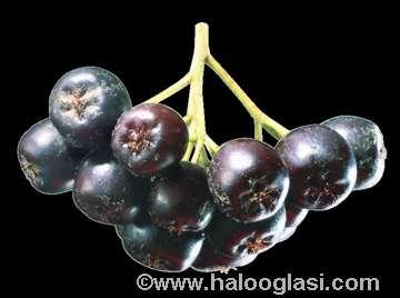Aronija svež plod
