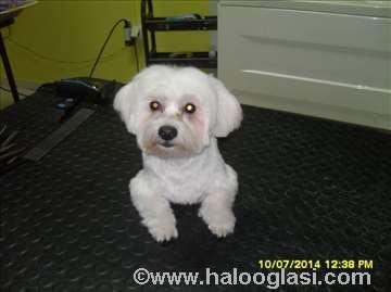 Šišanje pasa,  Grooming  salon za negu pasa