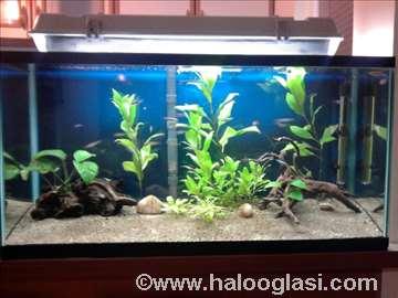 Prodajem kompletno uređen akvarijum