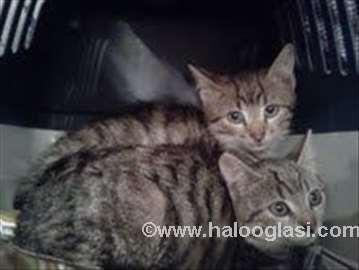 Mali mačići BONI i KLAJD na poklon