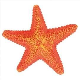 Morska zvezda 9cm