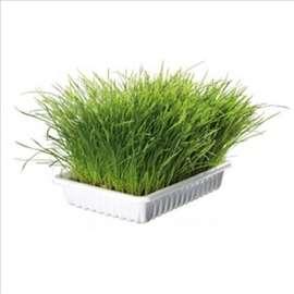 Mekana trava za mačiće u činiji