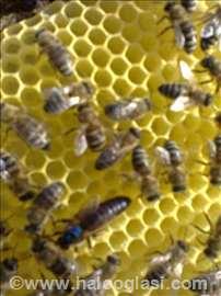 Pčelinje matice
