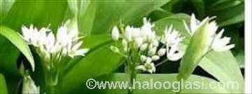 Sremuš - 20 biljaka