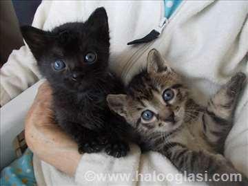 Mali mačići, brate i seke na poklon