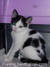 Crno-beli mali mačići na poklon