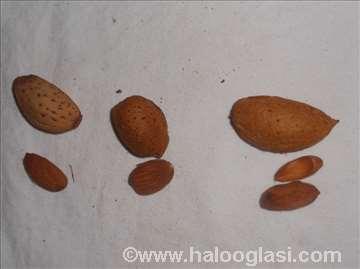 Očišćen plod badema