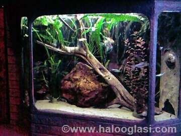 Akvarijum od 350l HITNO!!!