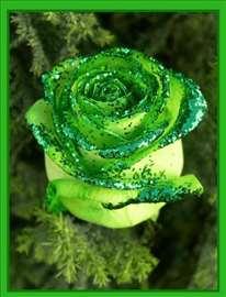 Zelena ruža