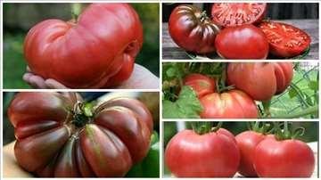Organske sorte paradajza-seme