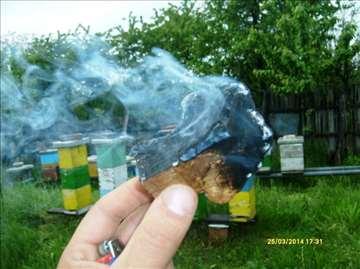 Pčelarska gljiva Trud - za smirivanje pčela