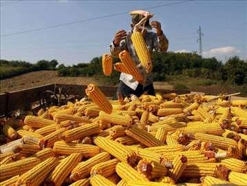 Kukuruz i pšenica, povoljno