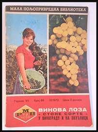 Vinova loza, Vinogradarstvo