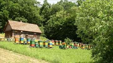 Pčelinje društvo