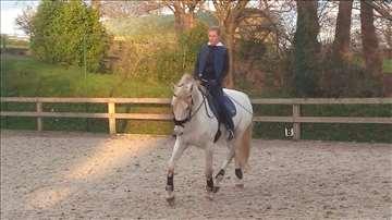 Pansion i obuka konja