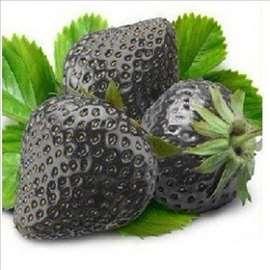 Egzotična crna jagoda