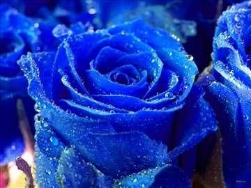 Japanska plava ruža seme