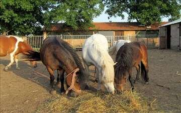 Poni konji na prodaju