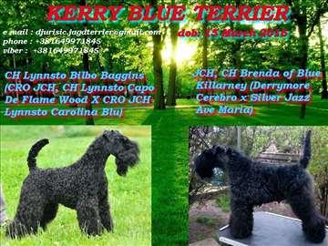 Kerry Blue Terijer stenci