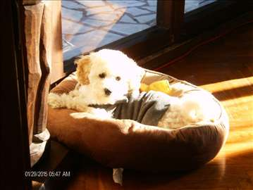 Pansion za malu i srednju rasu pasa
