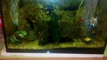 Akvarijum sa Ribicama 100L