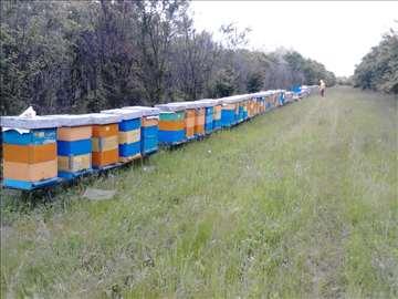 Prodaja pčelinjih društava RV košnice