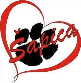 Pansion za pse Sapica-IN