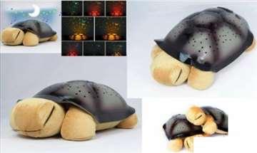Popularne zvezdane kornjače - bež boje