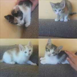 Mešanci mačići