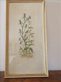 Slika - Cveće
