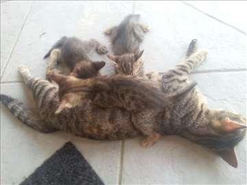 Mačići - poklanjamo
