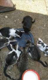 Pet slatkih malih mačića spremni za novi dom!!!!