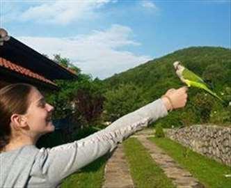 Kaluđerica najpitomija ptica