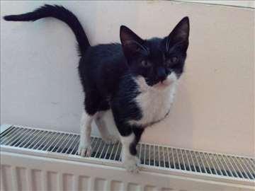 Presladak mačak od mesec i po traži dom