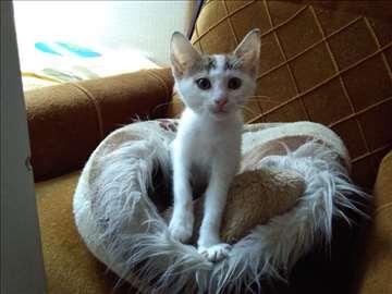 Preslatka i umiljata maca traži dom